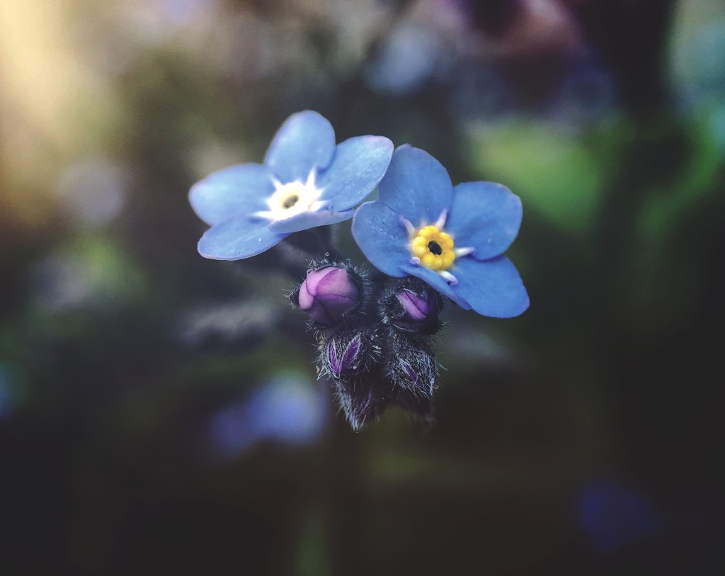 Forget-me-not: Understanding memory loss in dementia
